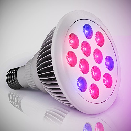 Using led grow lights for indoor gardening led lighting for Indoor gardening light bulbs